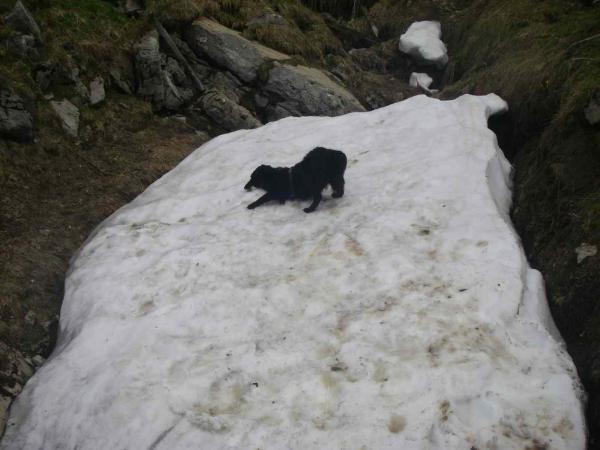 Fee findet den Schnee recht schee