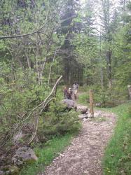 Der Weg führt durch den Wald