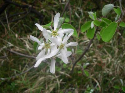 ...und schöne Blüten am Weg