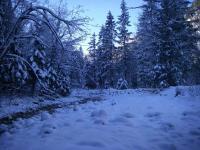 Winterliches Bachbett